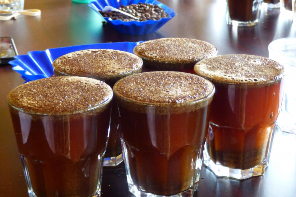 Cups of coffee ready to be cupped